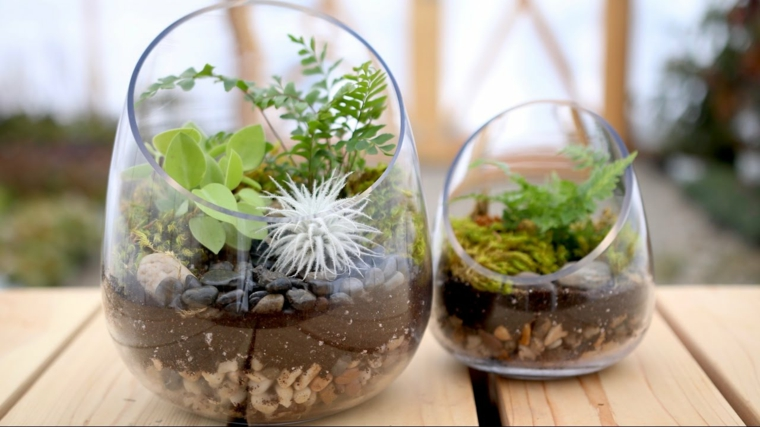advice-do-terrarium-house-ideas