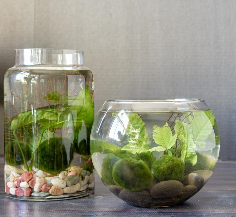 terrarium-water-options-house-decorate