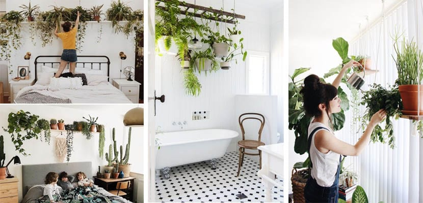 Decorate with hanging plants
