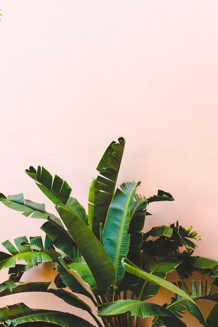 leaves-green-plants-decoration-plants