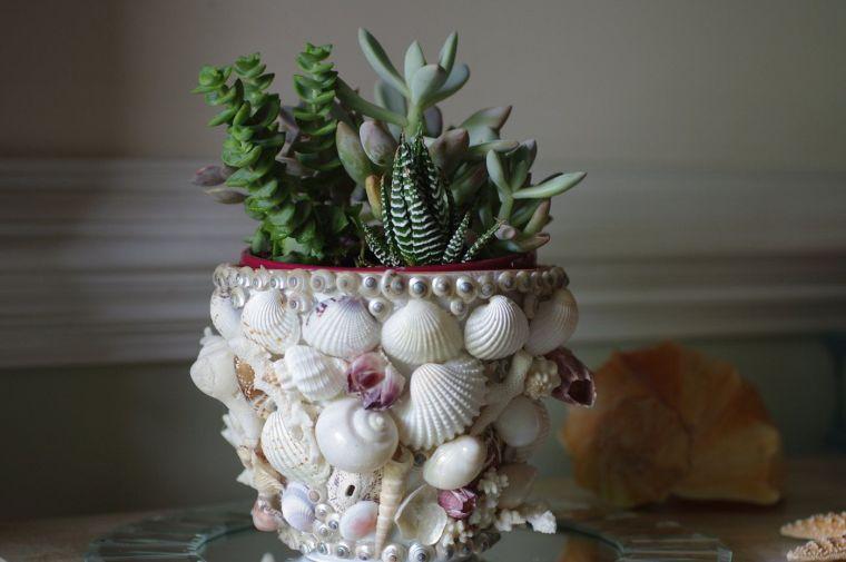 conchas marinas adornando materos