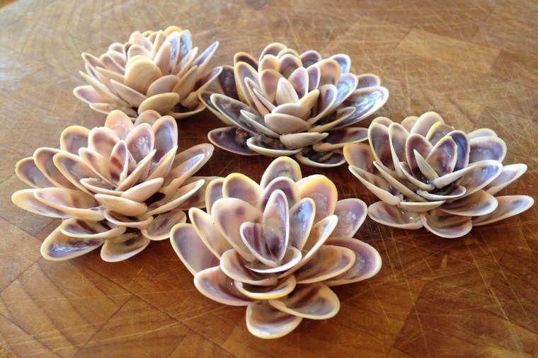 conchas marinas bricolaje flor