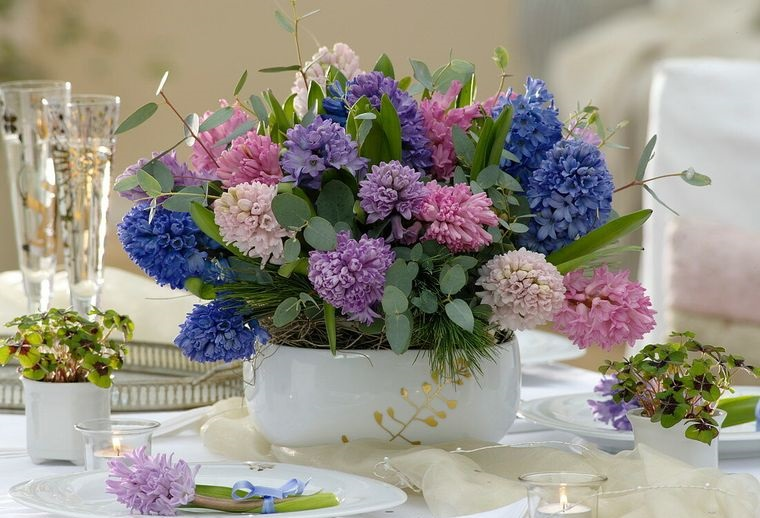 hyacinth flowers to decorate