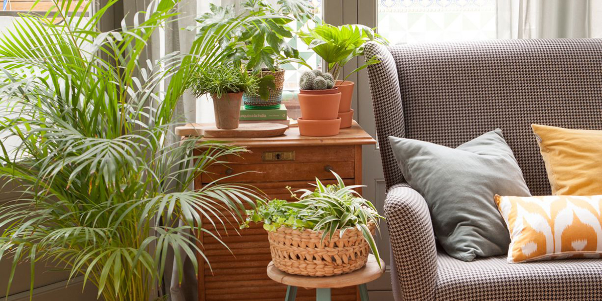 Decoration of plants for the living room