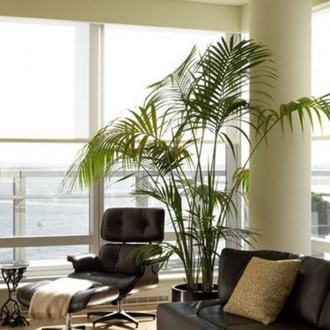 rooms-decorated-with-plants-1